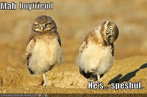 funny-pictures-owls-twisted-head.jpg